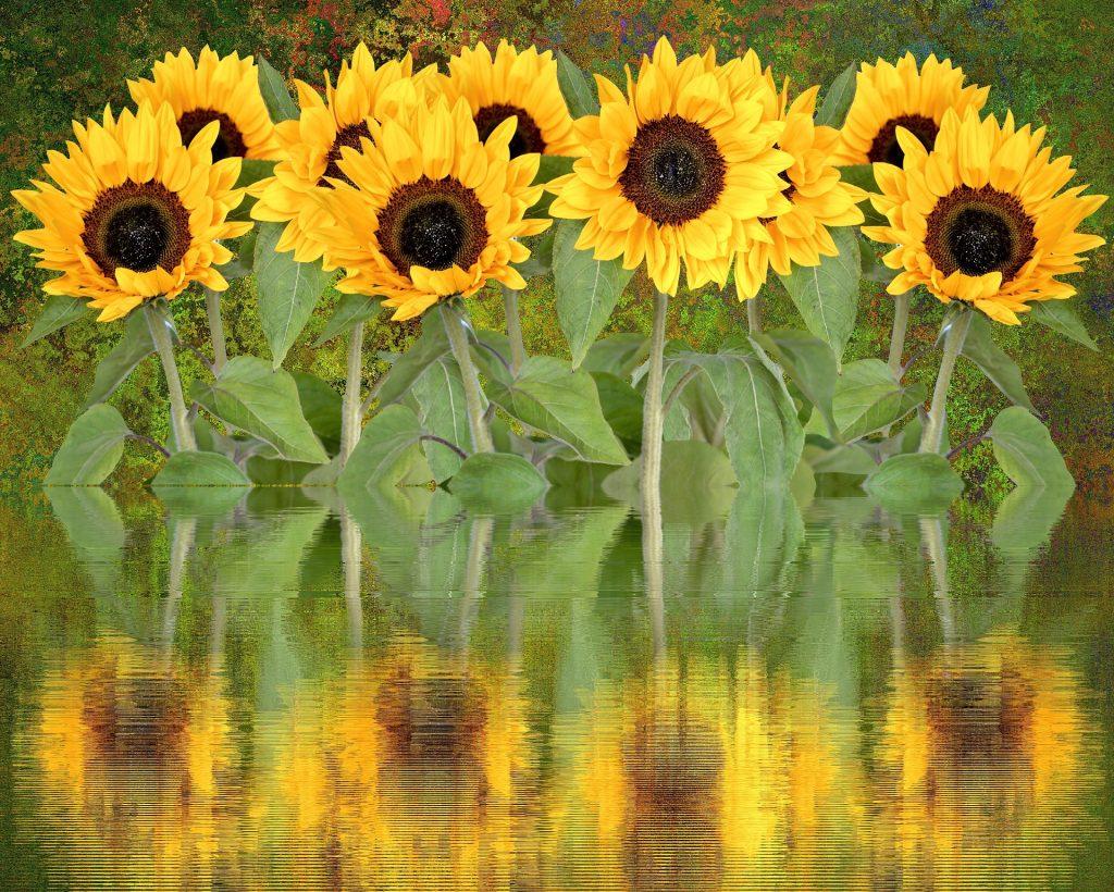 Be like a sunflower.
